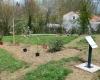 Plantation d'arbres 2