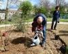 Plantation d'arbres 4