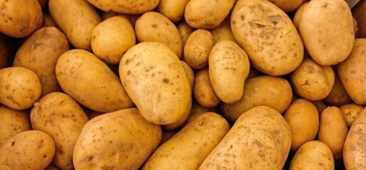 La Banque Alimentaire à la recherche de bénévoles pour le ramassage de pommes de terre