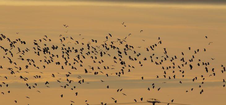 Prolongation de la période d'utilisation des canons effaroucheurs d'oiseaux